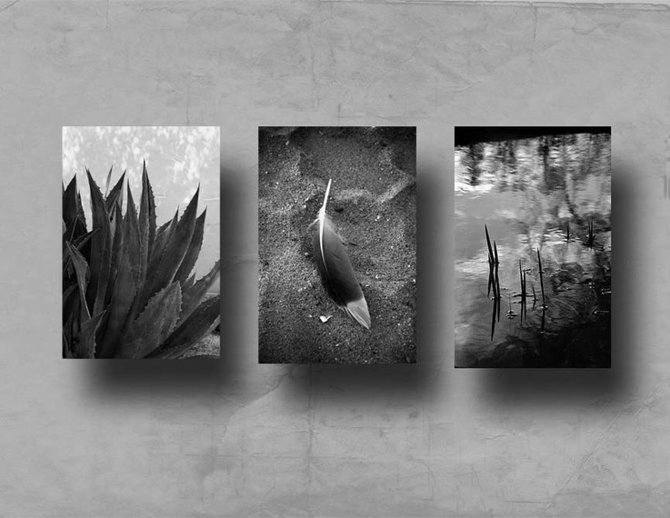 Zen_feather_3_bw_layout_72p